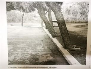 Roma, al via bando per accordo quadro da 60 milioni di euro per la manutenzione degli alberi Fiorini, in 3 anni interventi su oltre 160mila alberature. Una svolta che ci consentirà di ottimizzare la programmazione oltre il 2022