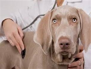 Registro tumori animali, in via di sperimentazione a Campobasso Oggi 1° marzo la presentazione presso l'Asrem di Campobasso