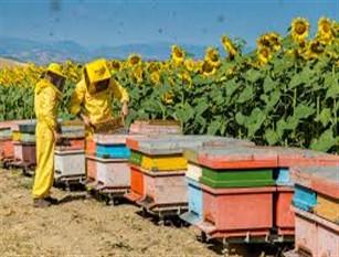La regione Molise ha pubblicato un bando per la commercializzazione dei prodotti per apicoltura Micaela Fanelli è stata promotore dell'iniziativa. Inoltre vi è stata la richiesta di ulteriori fondi per il settore in espansione e modifiche criteri di accesso.