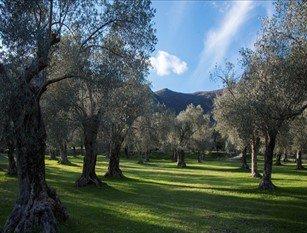 Idee per una promozione dell'olio e degli ambienti olivicoli molisani