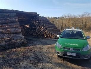 Carabinieri Forestali in azione: contrasto al pascolo abusivo, alla gestione illecita dei rifiuti e al commercio illegale di legname e derivati.