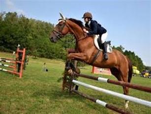 Al via progetto di equitazione integrata nella tenuta presidenziale Castelporziano