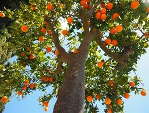 21 novembre «Giornata Nazionale degli Alberi» a tutela dell'ambiente e valorizzazione degli alberi in città Il comune di Isernia ha aderito a tale iniziativa