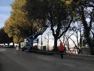 Frosinone, proseguono le potature in tutta la città.
