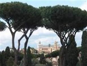 Campidoglio, piantati 101 nuovi alberi per i centenari