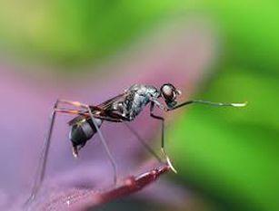 Il sindaco Gravina ha firmato l'Ordinanza sulla prevenzione e il controllo delle malattie trasmesse da insetti vettori