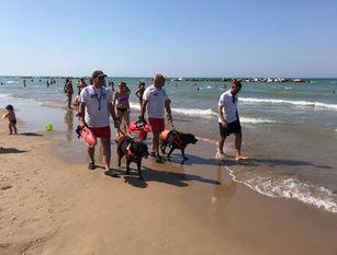 A Termoli i cani 'baywatch' in spiaggia libera Sono presenti il sabato e la domenica sugli arenili