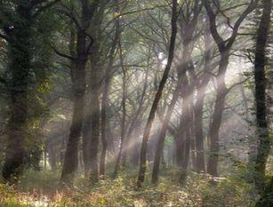 La Regione Molise plaude al grande lavoro effettuato negli incendi boschivi