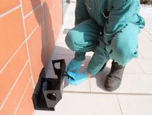 Avvistamento topi: nei prossimi giorni in programma nuovo intervento a tappeto sull'intera città
