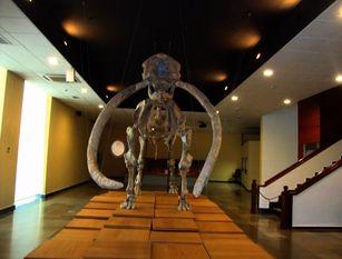 A Isernia riaperto il museo del paleolitico