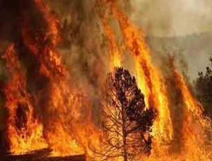 Sindaca Raggi firma ordinanza per prevenire gli incendi boschivi nel periodo estivo Il provvedimento sarà valido dal 15 giugno al 30 settembre