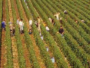 Lavoro: Cia, bene rinnovo contratto per 16mila quadri e impiegati agricoli