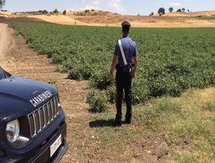 Agricoltore beccato e multato mentre appiccava fuochi