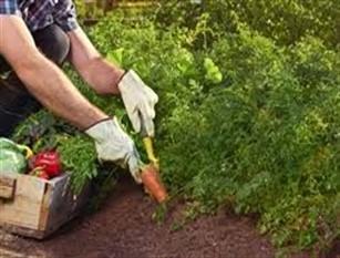 Soddisfazione del PD su ordinanza emanata dalla Regione in merito alla coltivazione di ortaggi