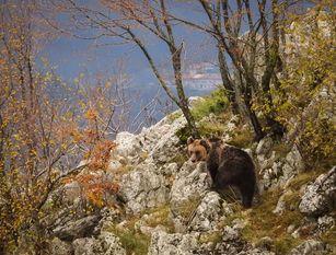 Impronte di orso marsicano a Lucito