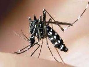 Prevenzione e controllo delle malattie trasmesse da insetti vettori e, in particolare, dalla zanzara tigre e dalla zanzara comune