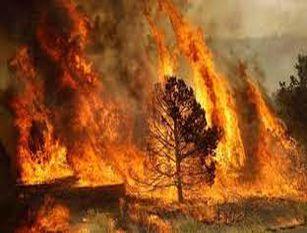 Incendi Basso Molise, chiesta dichiarazione stato d'emergenza