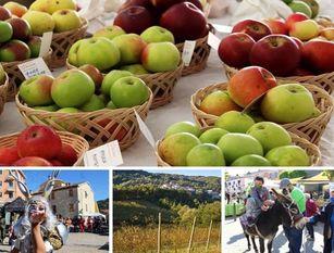 A Castel del Giudice nel week end protagoniste le mele Due giorni per 'celebrare' produzioni tipiche e antiche varietà