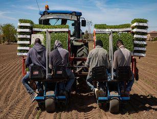 Prefettura Isernia, attività di emersione lavoro irregolare attraverso lo sportello unico Riguarda lavoratori stranieri non comunitari presenti nel territorio